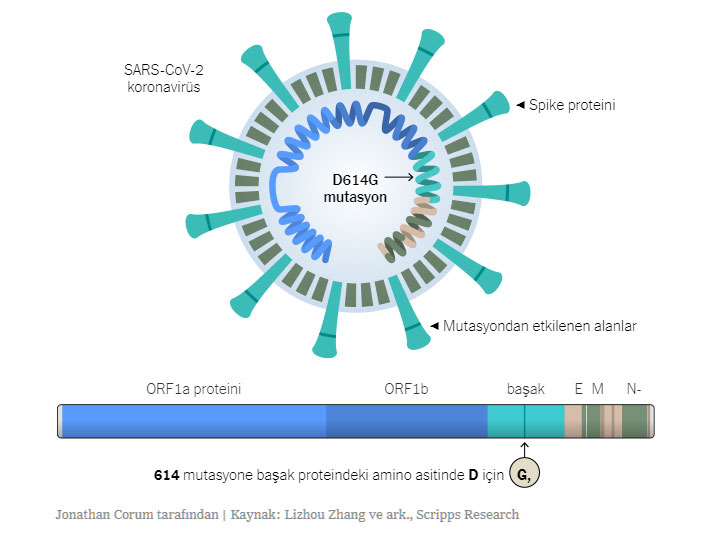 D614G Mutasyonu - Coronavirüs D614G Mutasyonu Bulaşma Yeteneğini Artırıyor mu?
